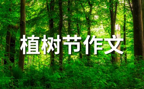 植树节征文——树苗!快快长大